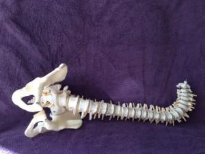 spine1copyrightstacey2013